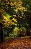 An Autumn Evening