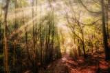Fog In The Foliage