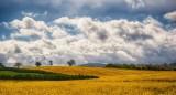 As we walk in fields of gold