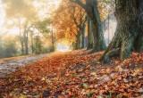 A Misty Autumn Morning