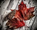 An Autumn Bounty