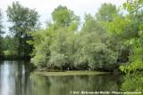 A small heronry at Gueugnon