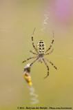 Arachnids  (Spinachtigen)