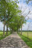 The Road to Fochteloo