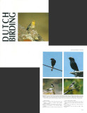 Dutch Birding - Volume 26. no 4