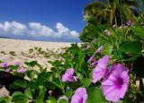 Fiji_043.jpg