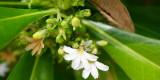 Fiji_048.jpg