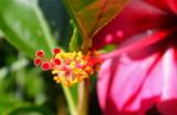 Fiji_049.jpg