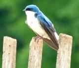 Birds of New Jersey