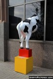 Cow sculpture in downtown Raleigh