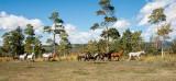 Wyoming Horses.jpg