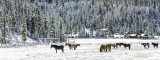 January 2014 - Winter - Winter On The Ranch - Carolyn Fox