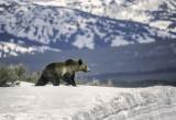 The Bear On the Mountain