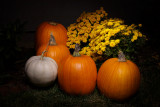 October 2014 - Light Painting - Fall Harvest - Terri Morris