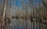 February 2015 - Reflections - Cypress Mangrove - Ray Rosewall