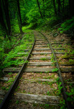 August 2015 - Leading Lines - Into The Woods - Linda Hanley