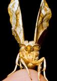 Moth-2010-2