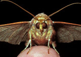 Moth-2014-1