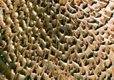 Fungi-Pattern---2