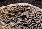 Fungi-Underside---3