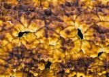 Orange-Crust-Fungi