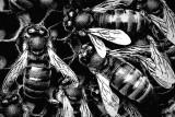 the hive (faux woodcut print)...