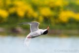 Tern turn turn....