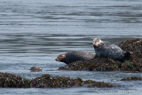 Harbour & Grey Seals