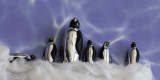 The March of The Penguins 3