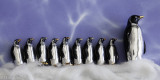 The March of The Penguins-6.jpg