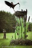 Asparagus Nest Series