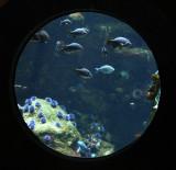 Aquarium at Caliornia Acadmy of Sciences
