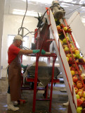 Shredding Apples