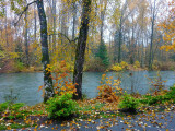 Autumn on the Cowichan RiverPatricia Rankin - June 2014