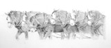 Moora Team of six registered Clydesdales - graphite pencil on Mellotex paper.