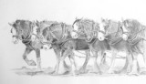 Moora team 2013 - graphite pencil on Mellotex paper.