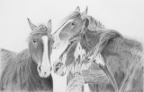 The Horse Whisperers - Cretacolour Nero Pencils on Strathmore Bristol Plate paper