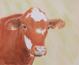 Red steer - pastel pencil - Art Spectrum Colourfix paper