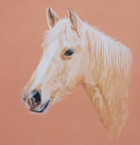 Palomino pony - Pastelmat - coloured pencils - Albrecht Durer and Coloursoft pencils