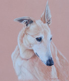 One of my fosters, Lady, from 2011 - Albrecht Durer coloured pencil on Pastelmat