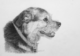 Barney - Border Terrier - Arches HP Aquarelle paper, Staedtler 2B & 3B pencils