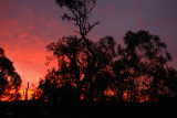 Sunset - looking South West. Showing where the top of the tree was ripped out by the storm.