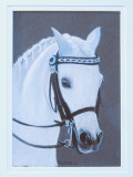 White pony 6 x 4 - pastel pencil on Pastelmat