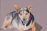 My friend Betty's Millie, a very lucky little rescue dog, so perfect for her. Pastel pencil, on Clairefontaine Pastelmat