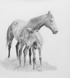 Thoroughbred mare and foal - graphite pencil on Arches Aquarelle paper