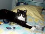 My cat - Toby