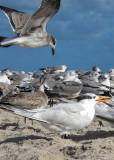 _birdland