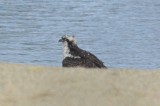 osprey silver lake wilmington