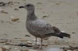 gulls_2014