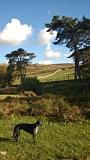 Peggy's Dartmoor Walk